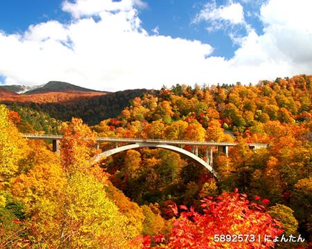 秋の観光ピークは11月! 購入者が求める旅行コンテンツとは?