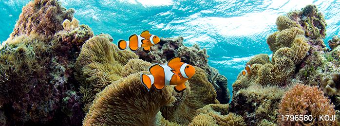 いよいよ「海開き」スタート!海の生物を映した海中動画素材まとめ
