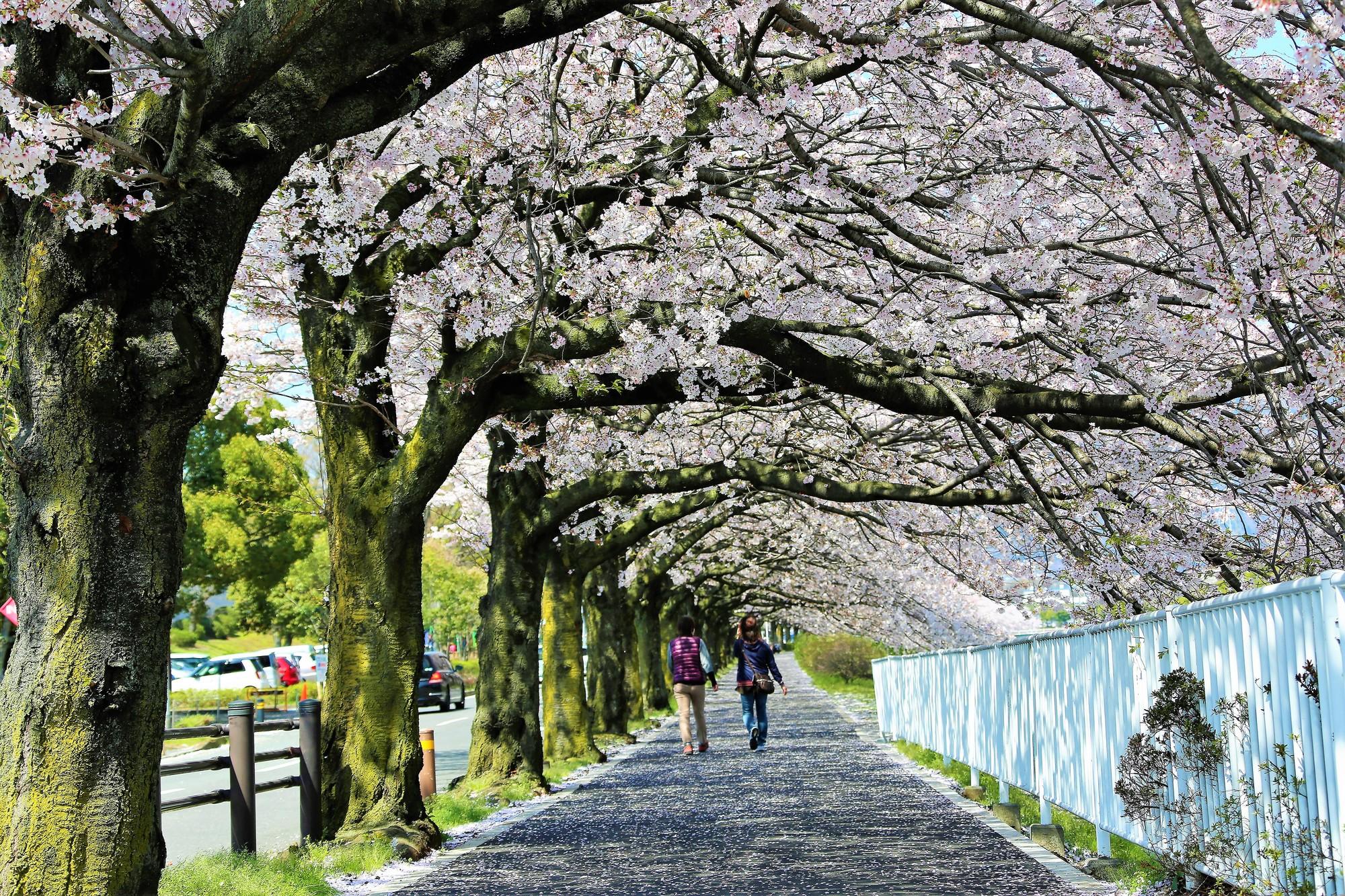 春の人生道