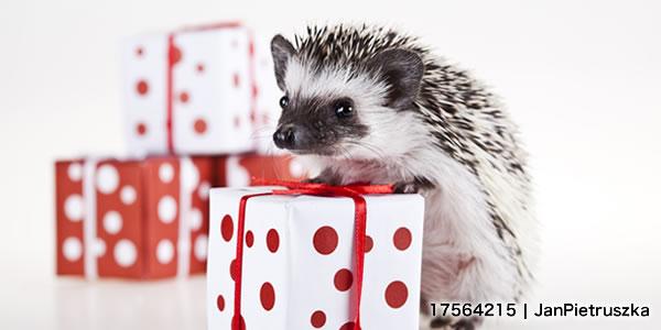 Hedgehog christmas, bright colorful vivid theme