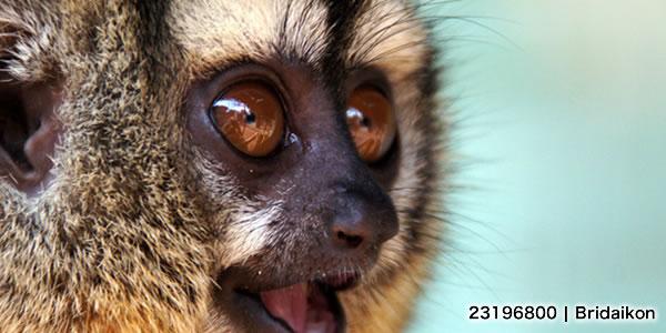 パラグアイ_動物